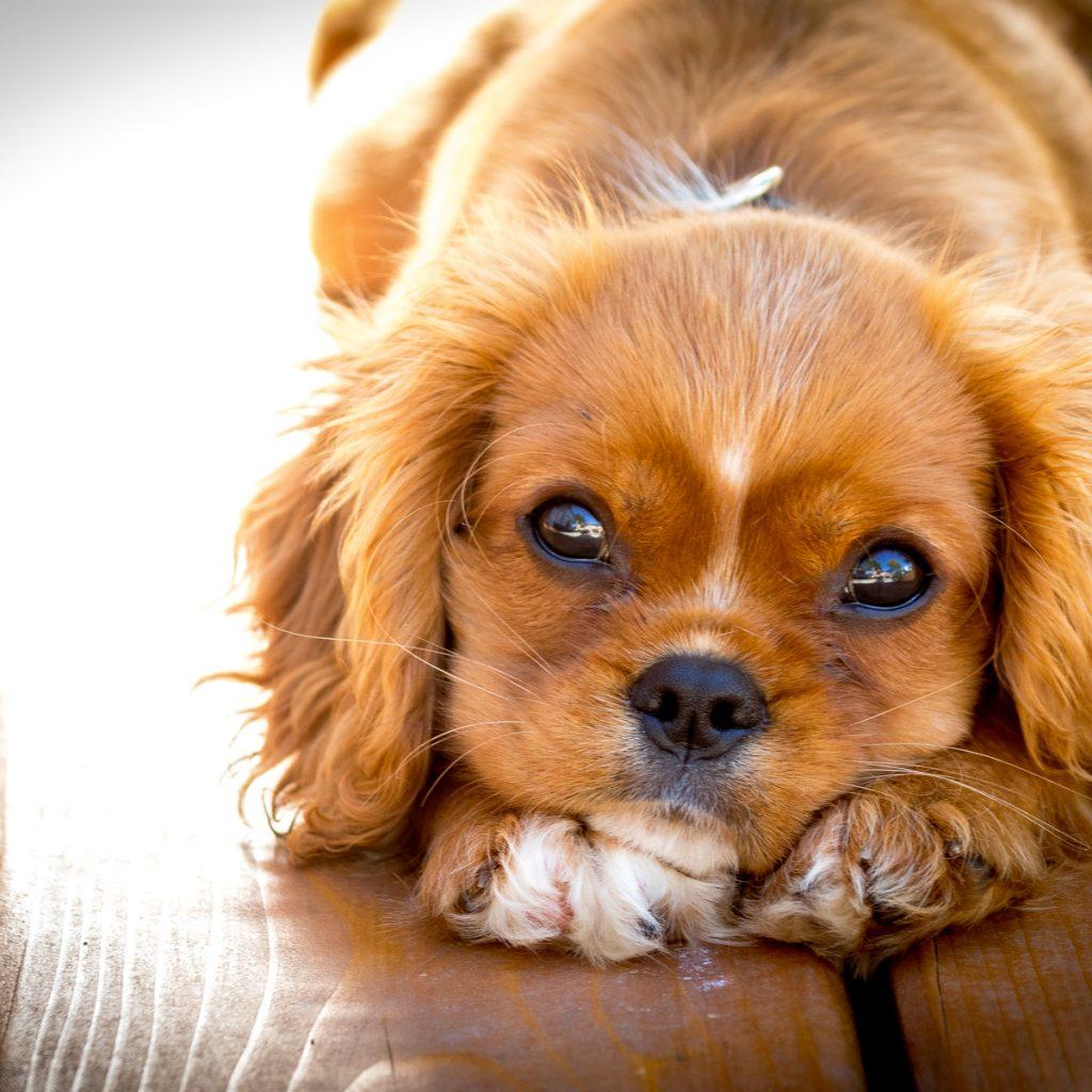 LOOK LIVE - Heel, Train Puppy